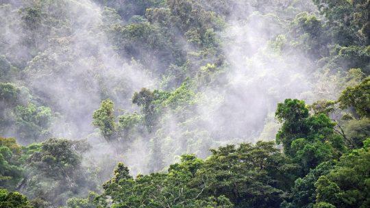 Le rôle négatif incontestable de l'homme sur l'environnement